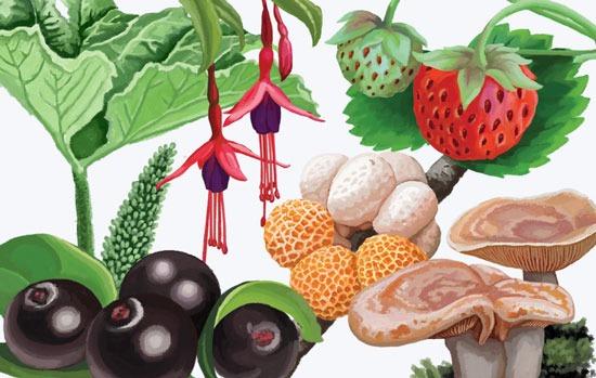 Alimentos originarios y endémicos de alto valor gastronómico